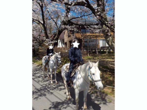 春の桜見乗馬